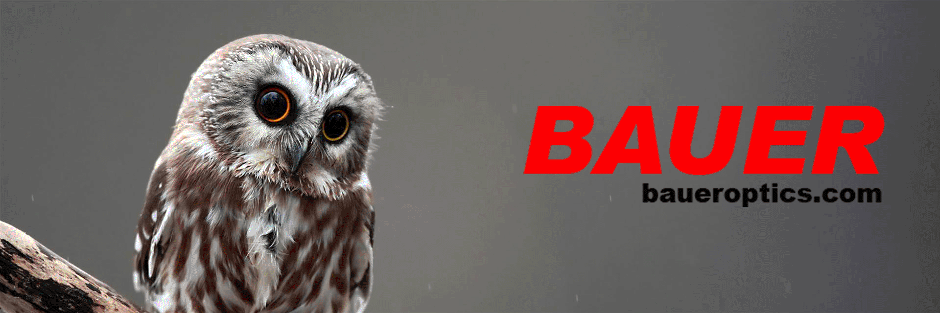 Bauer Title